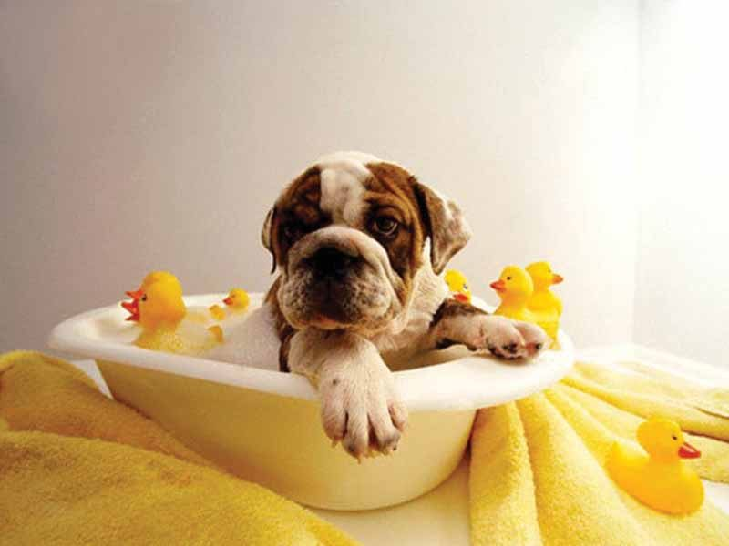 How to properly wash your dog?